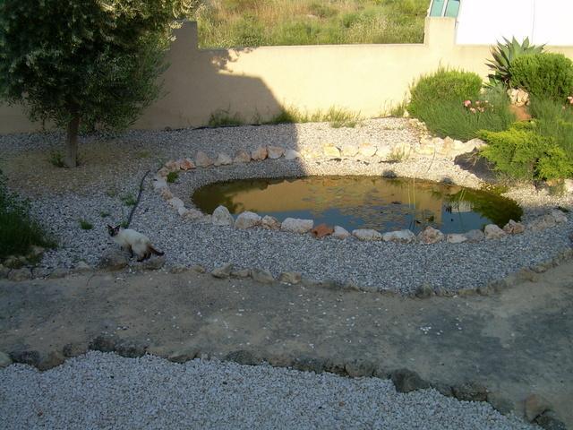 Construccion y mantencion de piletas para peces en santiago for Pileta con peces